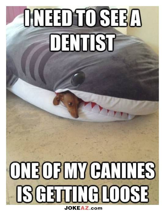 i-need-to-see-a-dentist-joke Dentist Gardena, Hawthorne Dentist, Lawndale Dentist, Lomita Dentist, Carson Dentist