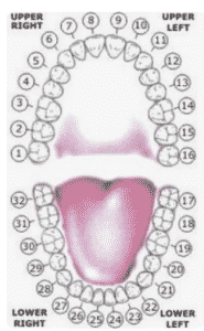 teeth-numbers-185x300 Blog