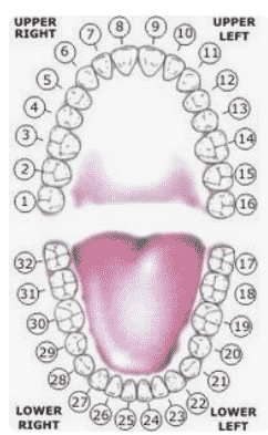 teeth-numbers Teeth Numbers